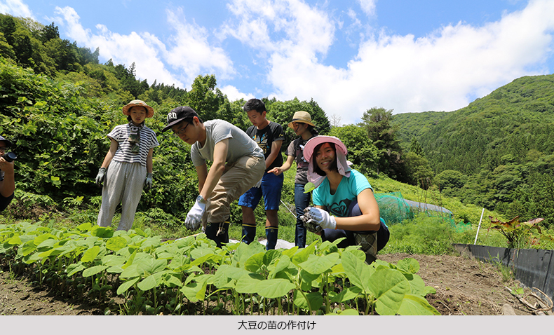 soybean_name.jpg